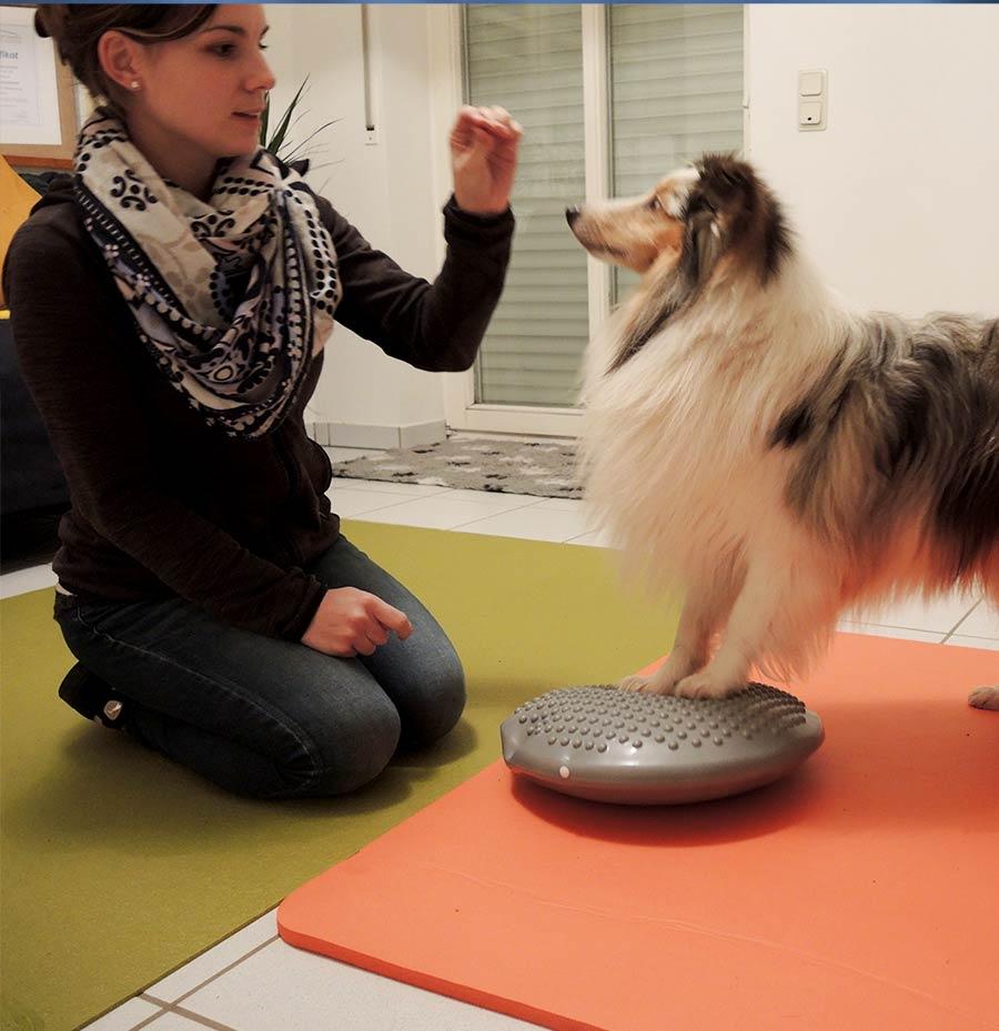 Hundephysiotherapie im Saarland
